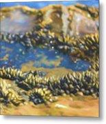Laguna Beach Tide Pool Pattern 3 Metal Print