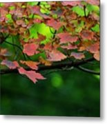 Laid Upon The Branches Metal Print