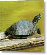 Laidback Turtle Metal Print