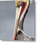 La Jolla Pelican Metal Print