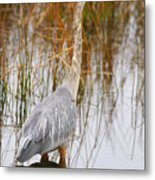 Lake Carmi Visitor Metal Print