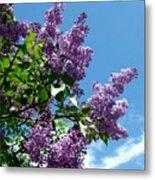 Lake Country Lilacs Metal Print