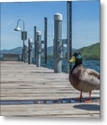 Lake George Duck Metal Print