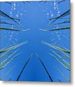 Lake Grass Reflection Metal Print