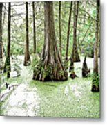 Lake Martin Swamp Metal Print