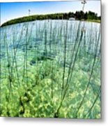 Lake Mindemoya Wading In The Reeds Metal Print