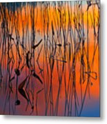 Lake Reeds And Sunset Colors Metal Print