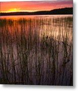 Lake Reeds At Sundown Metal Print