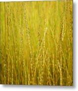 Lake Tahoe Wild Grasses Metal Print