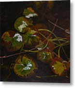 Lake Washington Lily Pad 16 Metal Print