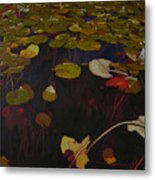 Lake Washington Lilypad 7 Metal Print