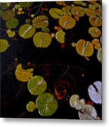 Lake Washington Lilypad 8 Metal Print