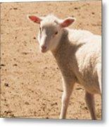 Lamb Looking Cute. Metal Print