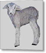 Lamb Metal Print