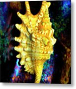 Lambis Digitata Seashell Metal Print