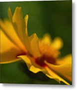 Lance Leaved Coreopsis Metal Print