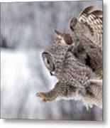 Landing Great Grey Owl Metal Print