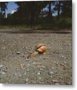 Landscape Of The Snail Metal Print