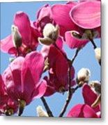 Landscape Pink Magnolia Flowers 46 Blue Sky Magnolia Tree Metal Print