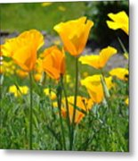 Landscape Poppy Flowers 5 Orange Poppies Hillside Meadow Art Metal Print
