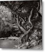 Landscape - The Forbidden Forest Metal Print