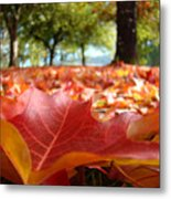 Landscape Trees Park Art Prints Autumn Fall Leaves Baslee Troutman Metal Print