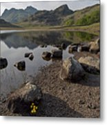 Langdale Pikes And Blea Tarn Metal Print