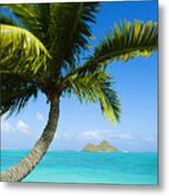 Lanikai Palm Metal Print