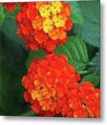 Lantana Bandana Red Flower Metal Print