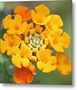 Lantana Flower Metal Print