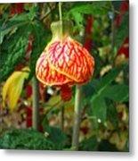 Lantern Flower Metal Print
