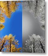 Larches Color To Black And White Reflection Metal Print