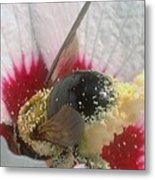 Large Bumble Bee In Flower Metal Print