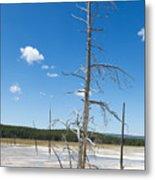 Large Dead Standing Tree In Hot Springs  Metal Print