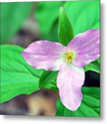 Large Flower Trillium Metal Print