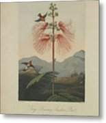 Large Flowering Sensitive Plant Metal Print by Robert John Thornton