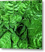 Large Green Display Of Concentric Leaves Metal Print