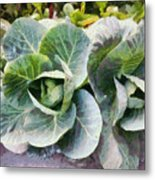 Large Leaves Of A Cabbage Plant Metal Print