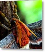 Large Moth Macro Metal Print