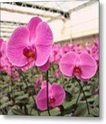 Large Orchid Nursery Metal Print