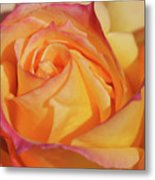 Large Peace Rose Center 006 Metal Print