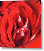 Large Red Rose Center - 003 Metal Print