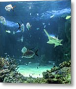 Large Sawfish And Other Fishes Swimming In A Large Aquarium Metal Print