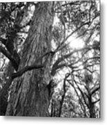 Large Tree Metal Print