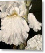 Large White Iris Metal Print