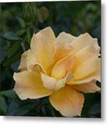 Large Yellow Rose II Metal Print