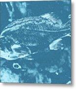 Largemouth Bass 8 Metal Print