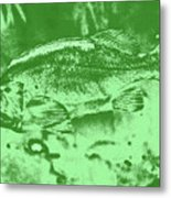 Largemouth Bass 9 Metal Print