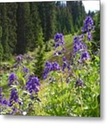Larkspur Along Trail Ridge Road Metal Print