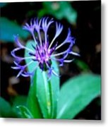 Last Flower In The Garden Metal Print